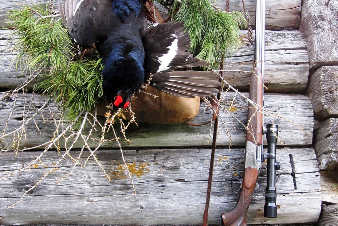 sekretär vogel jagd